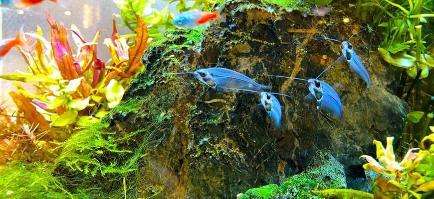 vybiraem-akvarium-po-fen-shuy-2